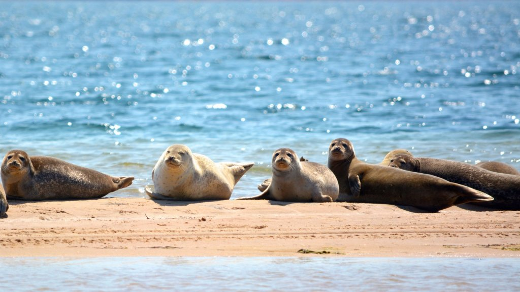 At certain times of the day (ask the locals), you can get within a few hundred metres of seals sunbathing on the sandbars. Though if you get too close, they all sod off pretty sharpish.